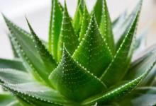 Evinizin Havasını Temizleyen Bitkiler Hangileridir?